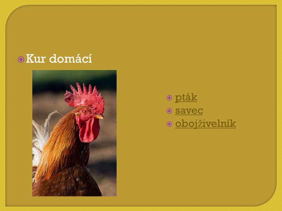  pták pták  savec savec  obojživelník obojživelník  Kur domácí