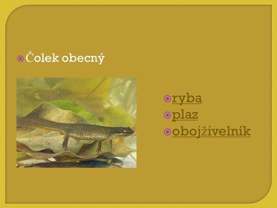  ryba ryba  plaz plaz  obojživelník obojživelník  Č olek obecný