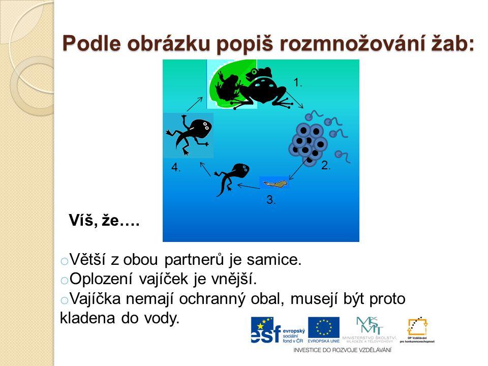 Podle obrázku popiš rozmnožování žab: Víš, že….o Větší z obou partnerů je samice.