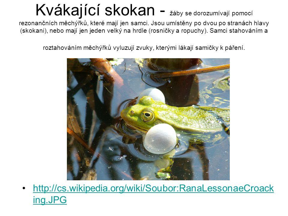 Kvákající skokan - žáby se dorozumívají pomocí rezonančních měchýřků, které mají jen samci. Jsou umístěny po dvou po stranách hlavy (skokani), nebo ma