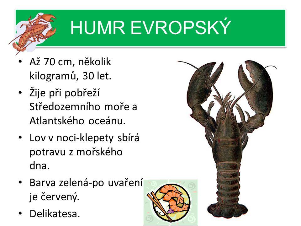 HUMR EVROPSKÝ Až 70 cm, několik kilogramů, 30 let.