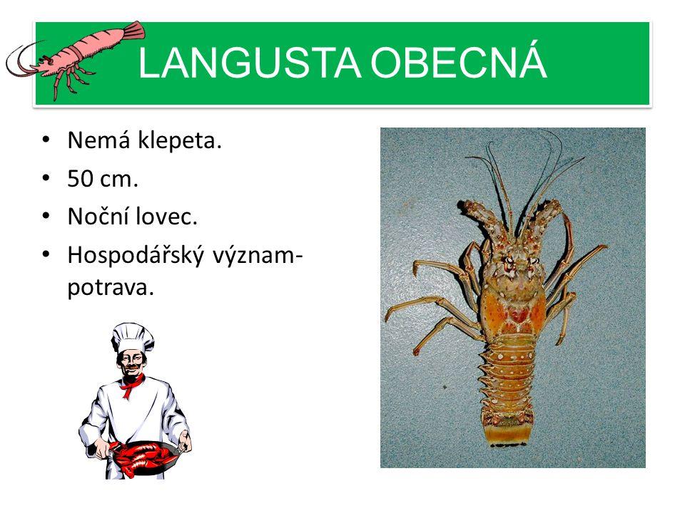 LANGUSTA OBECNÁ Nemá klepeta. 50 cm. Noční lovec. Hospodářský význam- potrava.
