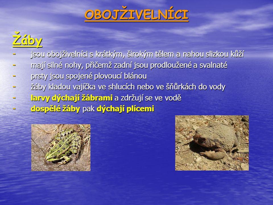 OBOJŽIVELNÍCIŽáby - jsou obojživelníci s krátkým, širokým tělem a nahou slizkou kůží - mají silné nohy, přičemž zadní jsou prodloužené a svalnaté - prsty jsou spojené plovoucí blánou - žáby kladou vajíčka ve shlucích nebo ve šňůrkách do vody - larvy dýchají žábrami a zdržují se ve vodě - dospělé žáby pak dýchají plícemi