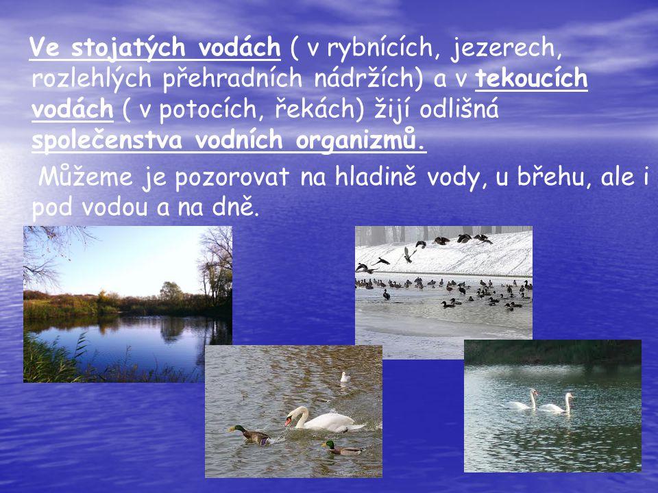 Ve stojatých vodách ( v rybnících, jezerech, rozlehlých přehradních nádržích) a v tekoucích vodách ( v potocích, řekách) žijí odlišná společenstva vodních organizmů.