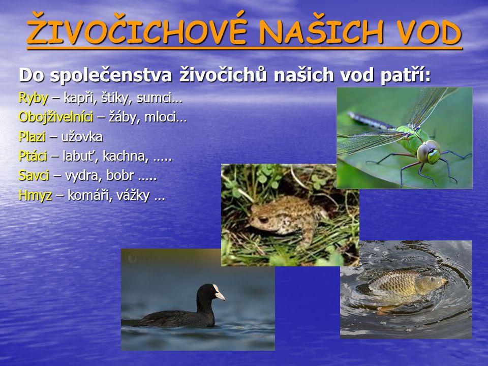 ŽIVOČICHOVÉ NAŠICH VOD Do společenstva živočichů našich vod patří: Ryby – kapři, štiky, sumci… Obojživelníci – žáby, mloci… Plazi – užovka Ptáci – lab
