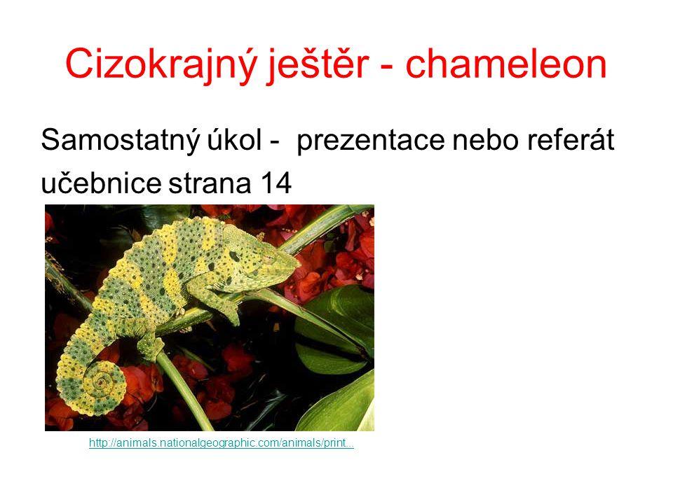 Cizokrajný ještěr - chameleon Samostatný úkol - prezentace nebo referát učebnice strana 14 http://animals.nationalgeographic.com/animals/print...
