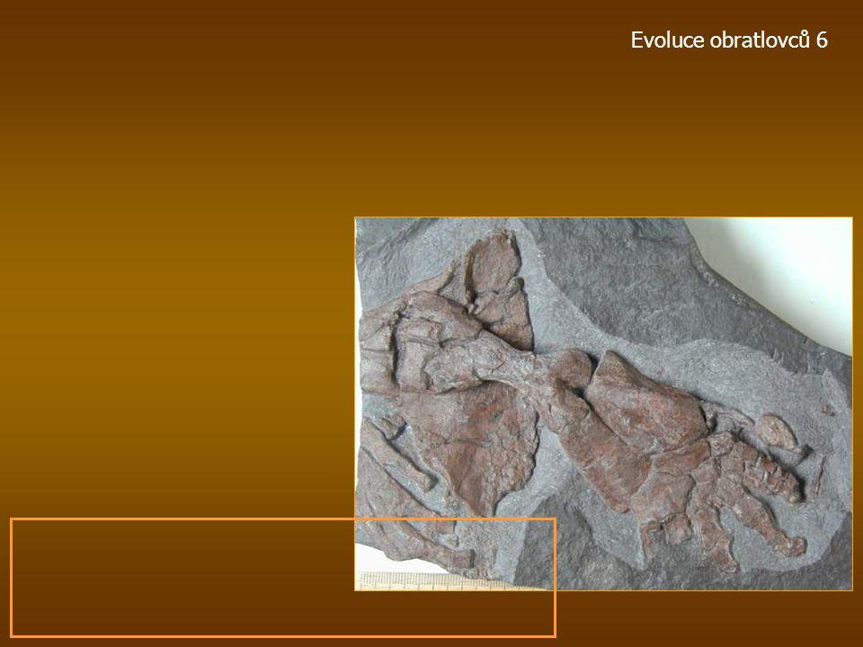 Ichthyostega pozdní devon, -360 mil. let, Grónsko