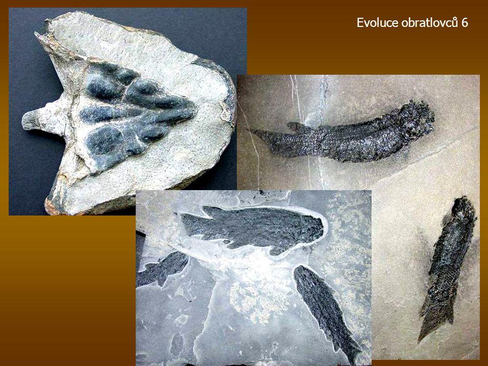Přechod obratlovců na souš B170P43 Evoluce obratlovců 6