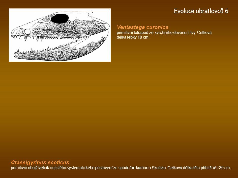 Acanthostega pozdní devon, -360 mil. let, Grónsko