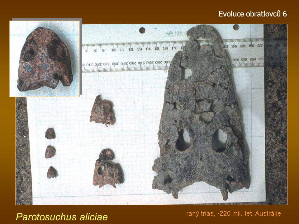 Evoluce obratlovců 6 Mastodonsaurus giganteus (Temnospondyli, Mastodonsauridae) ze spodního triasu Německa patří mezi největší obojživelníky, kteří kd