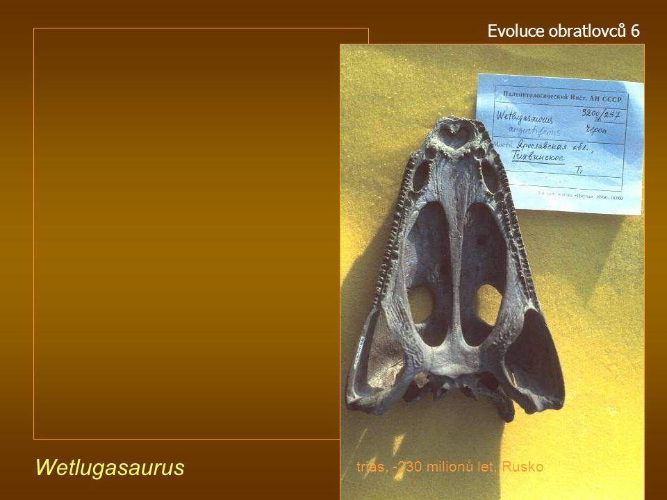 Parotosuchus aliciae raný trias, -220 mil. let, Austrálie Evoluce obratlovců 6
