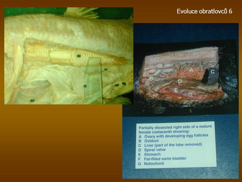 Recentní Coelacanthi