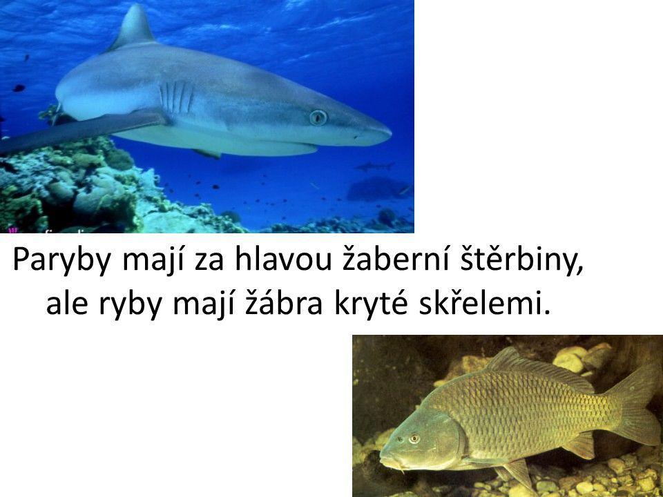 Obojživelníci žijí část života jako ryby a část života jako suchozemští tvorové.