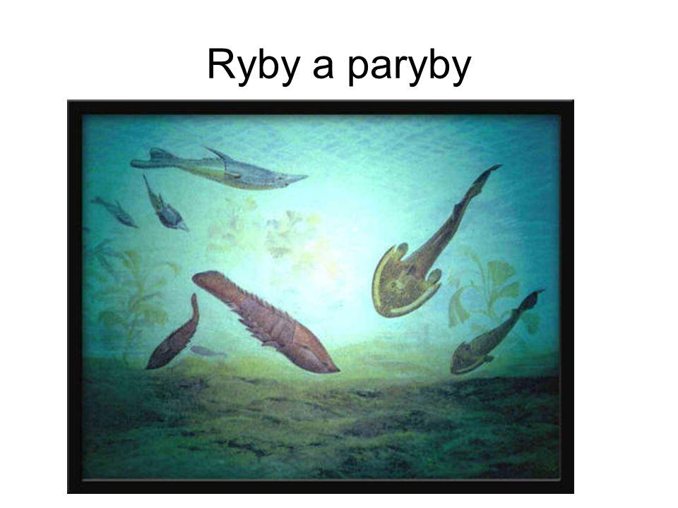 Ryby a paryby