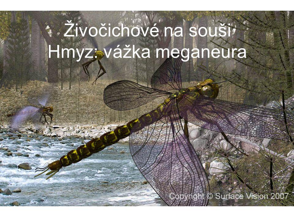 Živočichové na souši Hmyz: vážka meganeura