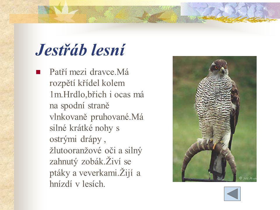 Jestřáb lesní Patří mezi dravce.Má rozpětí křídel kolem 1m.Hrdlo,břich i ocas má na spodní straně vlnkovaně pruhované.Má silné krátké nohy s ostrými drápy, žlutooranžové oči a silný zahnutý zobák.Živí se ptáky a veverkami.Žijí a hnízdí v lesích.