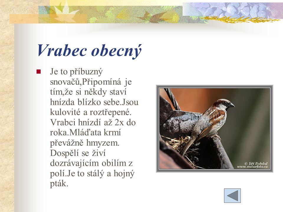 Vrabec obecný Je to příbuzný snovačů,Připomíná je tím,že si někdy staví hnízda blízko sebe.Jsou kulovité a roztřepené.