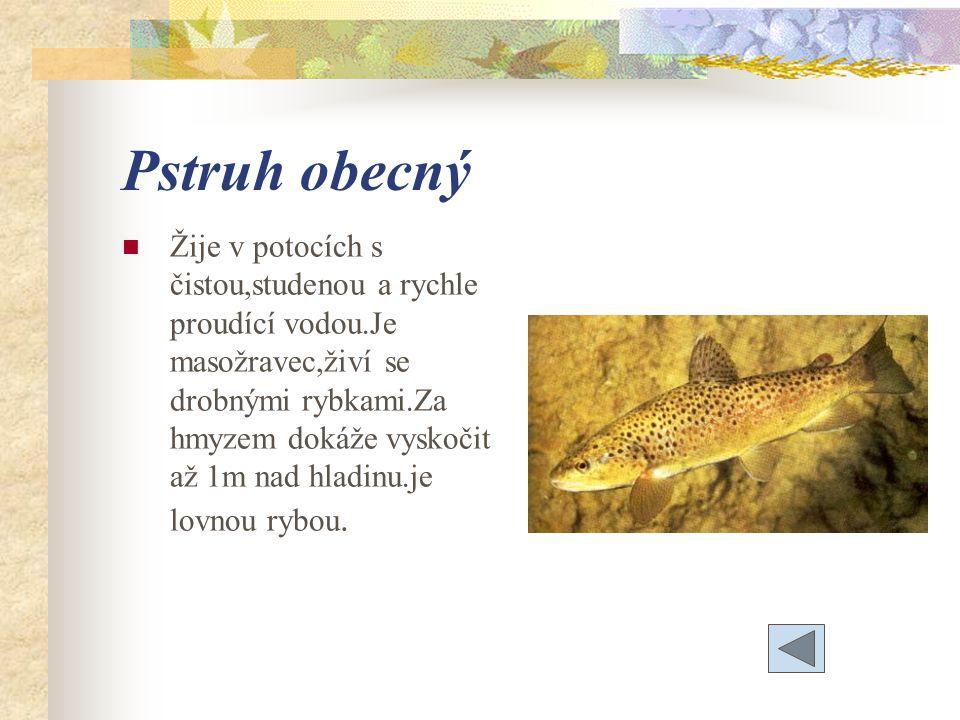 Pstruh obecný Žije v potocích s čistou,studenou a rychle proudící vodou.Je masožravec,živí se drobnými rybkami.Za hmyzem dokáže vyskočit až 1m nad hladinu.je lovnou rybou.