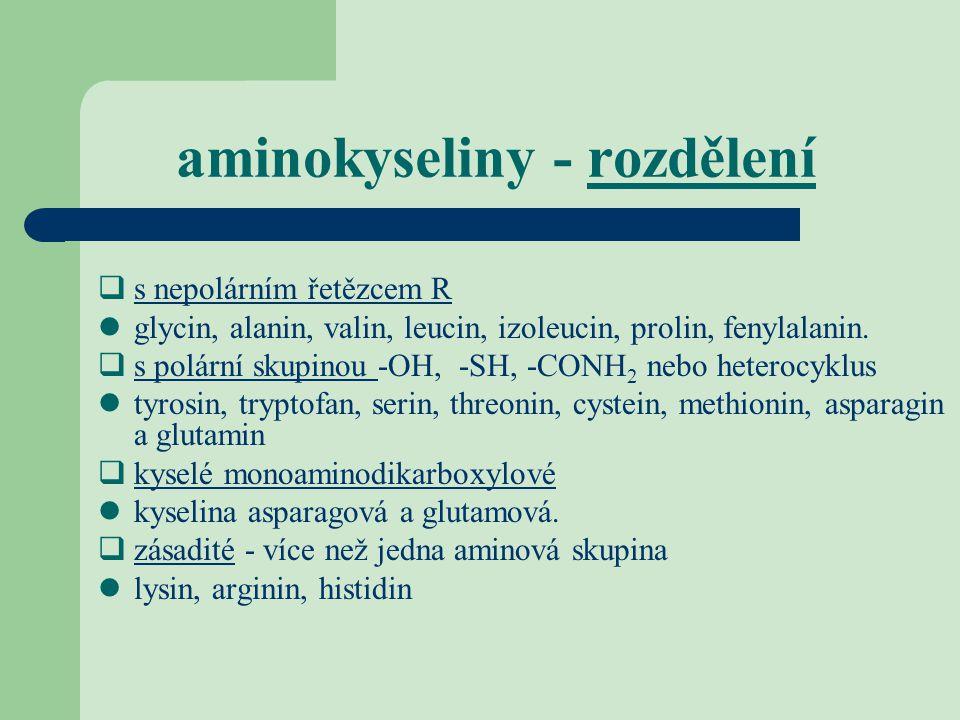 aminokyseliny - rozdělení  s nepolárním řetězcem R glycin, alanin, valin, leucin, izoleucin, prolin, fenylalanin.  s polární skupinou -OH, -SH, -CON