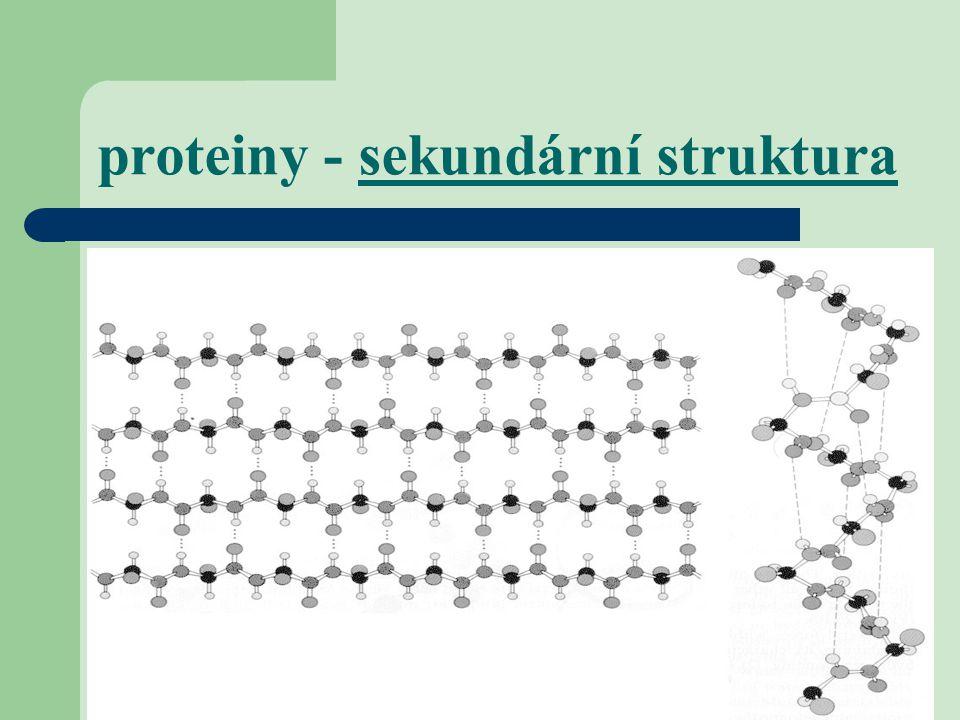 proteiny - sekundární struktura