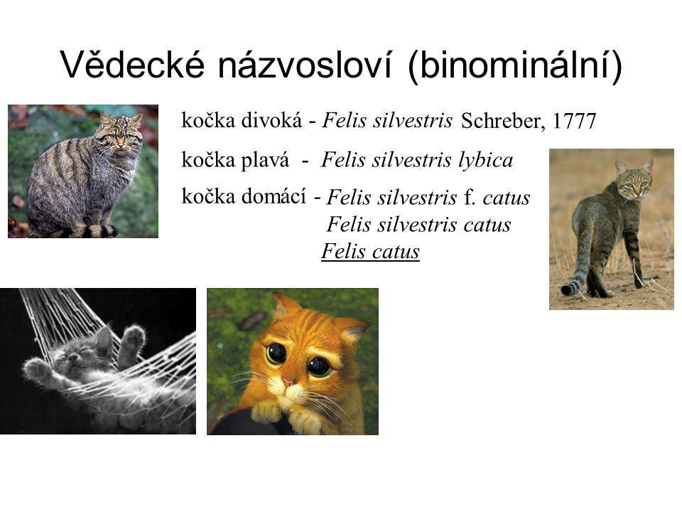 kočka divoká - Felis silvestris Felis silvestris lybica kočka plavá - Schreber, 1777 kočka domácí - Felis silvestris f.