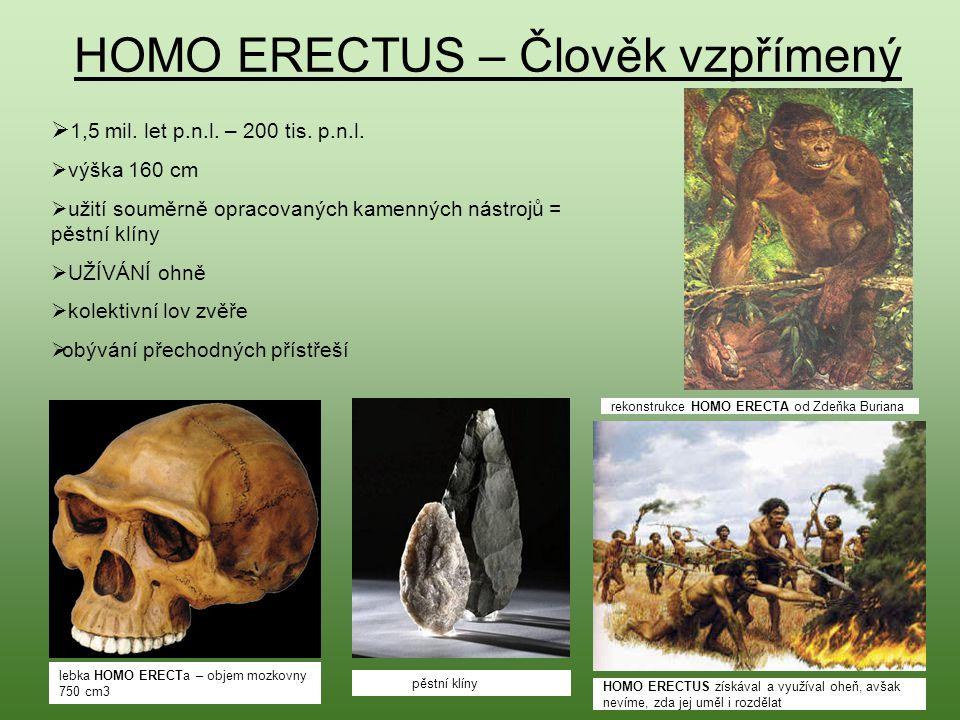 HOMO ERECTUS – Člověk vzpřímený  1 1,5 mil. let p.n.l. – 200 tis. p.n.l.  výška 160 cm  užití souměrně opracovaných kamenných nástrojů = pěstní kl