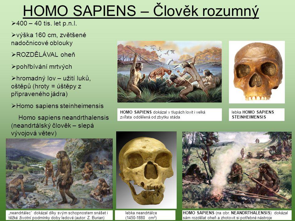 HOMO SAPIENS – Člověk rozumný  400 – 40 tis. let p.n.l.  výška 160 cm, zvětšené nadočnicové oblouky  ROZDĚLÁVAL oheň  pohřbívání mrtvých  hromadn