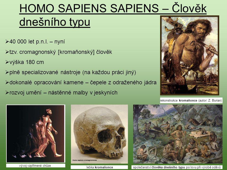 HOMO SAPIENS SAPIENS – Člověk dnešního typu  40 000 let p.n.l. – nyní  tzv. cromagnonský [kromaňonský] člověk  výška 180 cm  plně specializované n