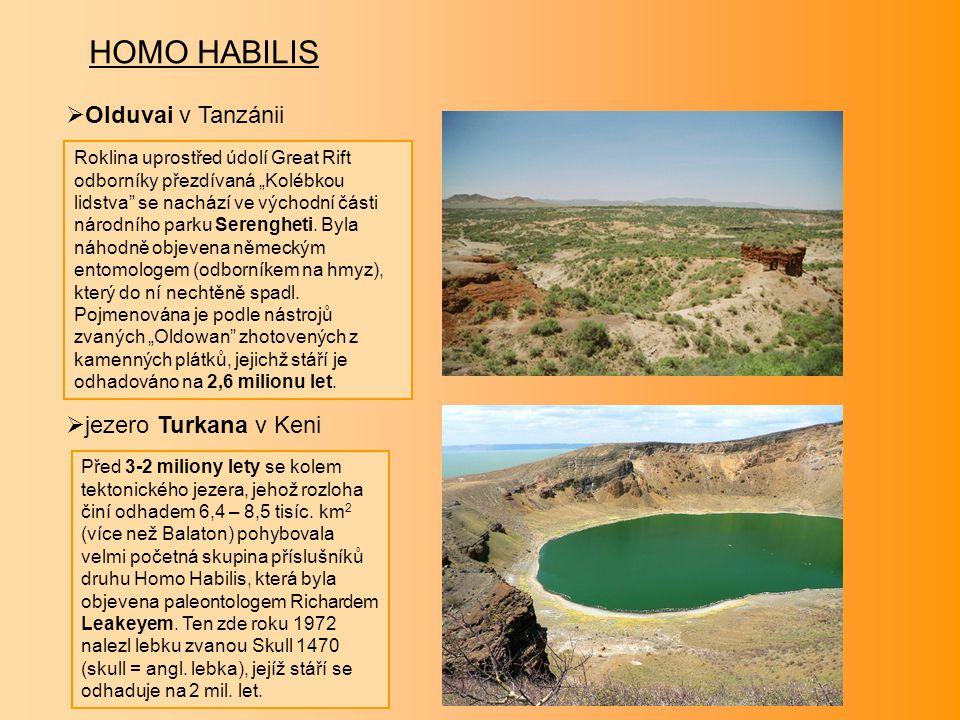 """HOMO HABILIS  Olduvai v Tanzánii  jezero Turkana v Keni Roklina uprostřed údolí Great Rift odborníky přezdívaná """"Kolébkou lidstva"""" se nachází ve výc"""