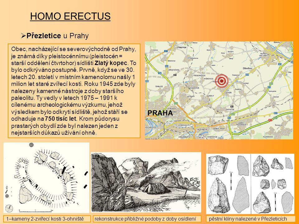 HOMO ERECTUS  Přezletice u Prahy Obec, nacházející se severovýchodně od Prahy, je známá díky pleistocénnímu (pleistocén = starší oddělení čtvrtohor)