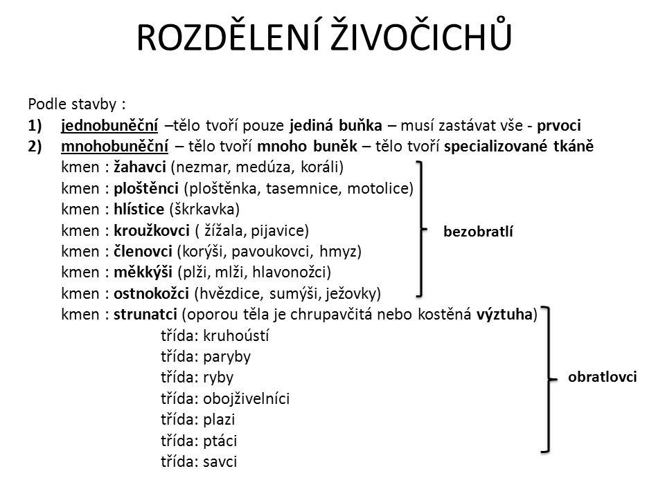 ROZDĚLENÍ ŽIVOČICHŮ Podle stavby : 1)jednobuněční –tělo tvoří pouze jediná buňka – musí zastávat vše - prvoci 2)mnohobuněční – tělo tvoří mnoho buněk – tělo tvoří specializované tkáně kmen : žahavci (nezmar, medúza, koráli) kmen : ploštěnci (ploštěnka, tasemnice, motolice) kmen : hlístice (škrkavka) kmen : kroužkovci ( žížala, pijavice) kmen : členovci (korýši, pavoukovci, hmyz) kmen : měkkýši (plži, mlži, hlavonožci) kmen : ostnokožci (hvězdice, sumýši, ježovky) kmen : strunatci (oporou těla je chrupavčitá nebo kostěná výztuha) třída: kruhoústí třída: paryby třída: ryby třída: obojživelníci třída: plazi třída: ptáci třída: savci bezobratlí obratlovci