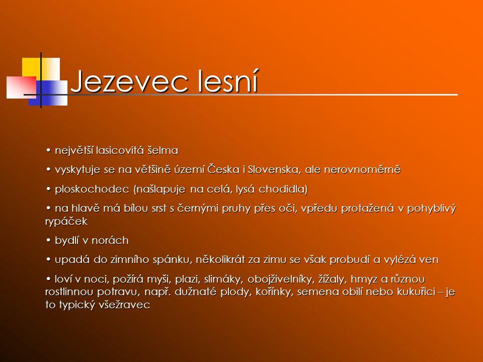 Jezevec lesní největší lasicovitá šelma největší lasicovitá šelma vyskytuje se na většině území Česka i Slovenska, ale nerovnoměrně vyskytuje se na vě