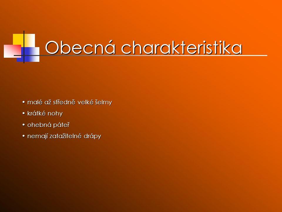 Jezevec lesní největší lasicovitá šelma největší lasicovitá šelma vyskytuje se na většině území Česka i Slovenska, ale nerovnoměrně vyskytuje se na většině území Česka i Slovenska, ale nerovnoměrně ploskochodec (našlapuje na celá, lysá chodidla) ploskochodec (našlapuje na celá, lysá chodidla) na hlavě má bílou srst s černými pruhy přes oči, vpředu protažená v pohyblivý rypáček na hlavě má bílou srst s černými pruhy přes oči, vpředu protažená v pohyblivý rypáček bydlí v norách bydlí v norách upadá do zimního spánku, několikrát za zimu se však probudí a vylézá ven upadá do zimního spánku, několikrát za zimu se však probudí a vylézá ven loví v noci, požírá myši, plazi, slimáky, obojživelníky, žížaly, hmyz a různou rostlinnou potravu, např.