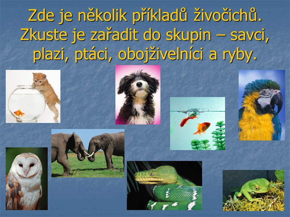 Zde je několik příkladů živočichů. Zkuste je zařadit do skupin – savci, plazi, ptáci, obojživelníci a ryby.