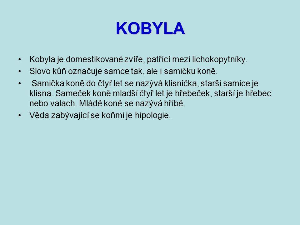 KOBYLA Kobyla je domestikované zvíře, patřící mezi lichokopytníky.