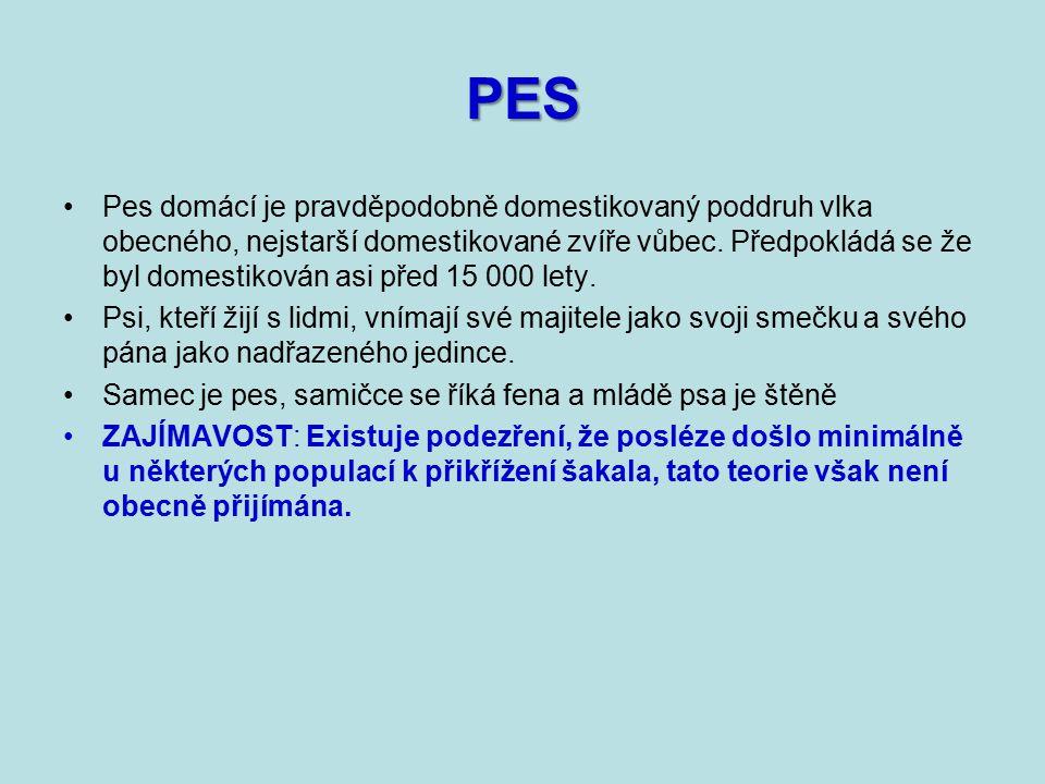 PES Pes domácí je pravděpodobně domestikovaný poddruh vlka obecného, nejstarší domestikované zvíře vůbec.
