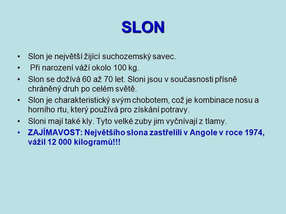 SLON Slon je největší žijící suchozemský savec.Při narození váží okolo 100 kg.