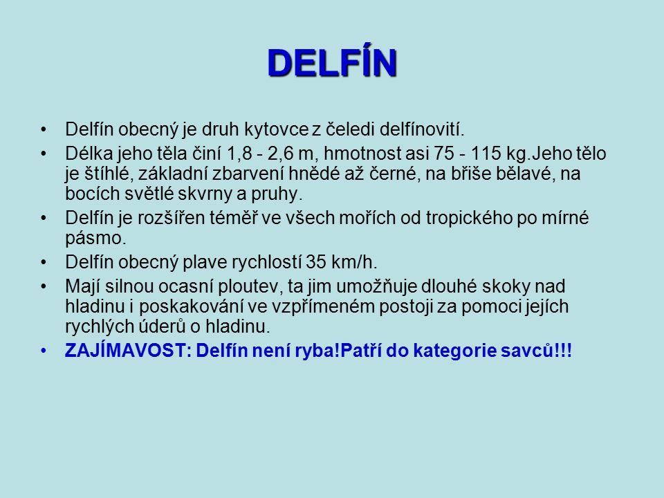 DELFÍN Delfín obecný je druh kytovce z čeledi delfínovití.