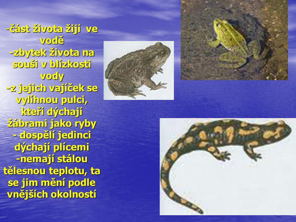 -část života žijí ve vodě -zbytek života na souši v blízkosti vody -z jejich vajíček se vylíhnou pulci, kteří dýchají žábrami jako ryby - dospělí jedi