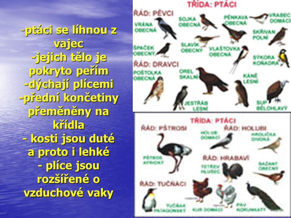 -ptáci se líhnou z vajec -jejich tělo je pokryto peřím -dýchají plícemi -přední končetiny přeměněny na křídla - kosti jsou duté a proto i lehké - plíc