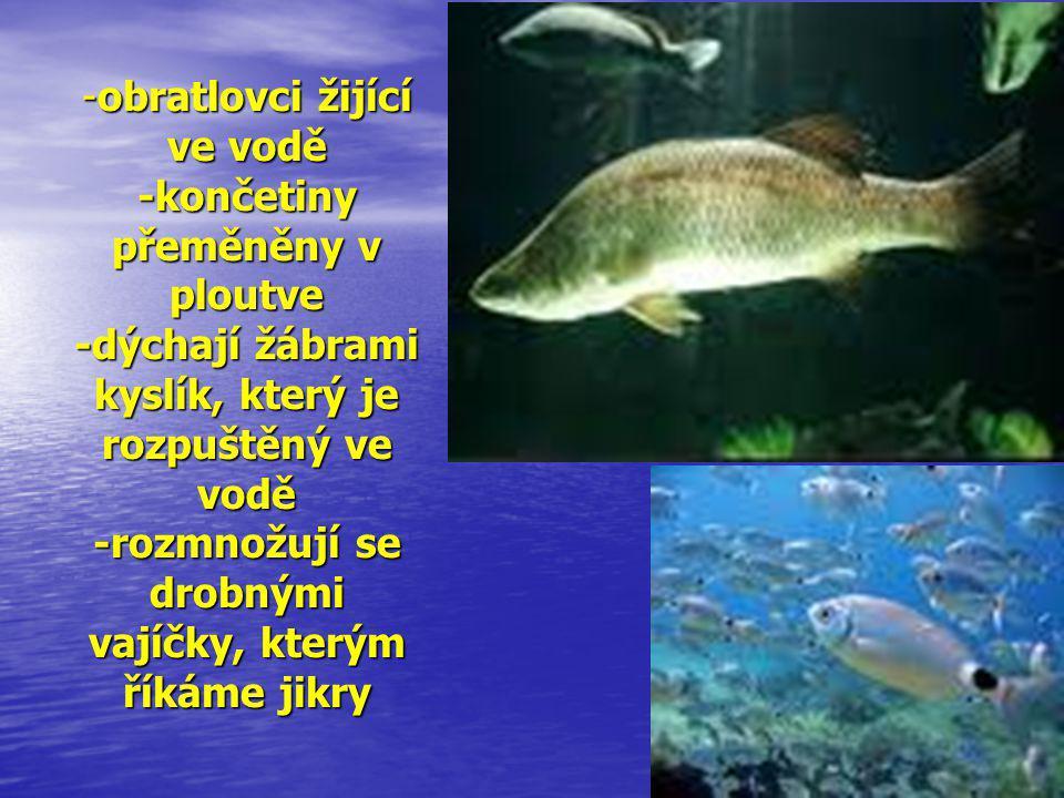 -obratlovci žijící ve vodě -končetiny přeměněny v ploutve -dýchají žábrami kyslík, který je rozpuštěný ve vodě -rozmnožují se drobnými vajíčky, kterým