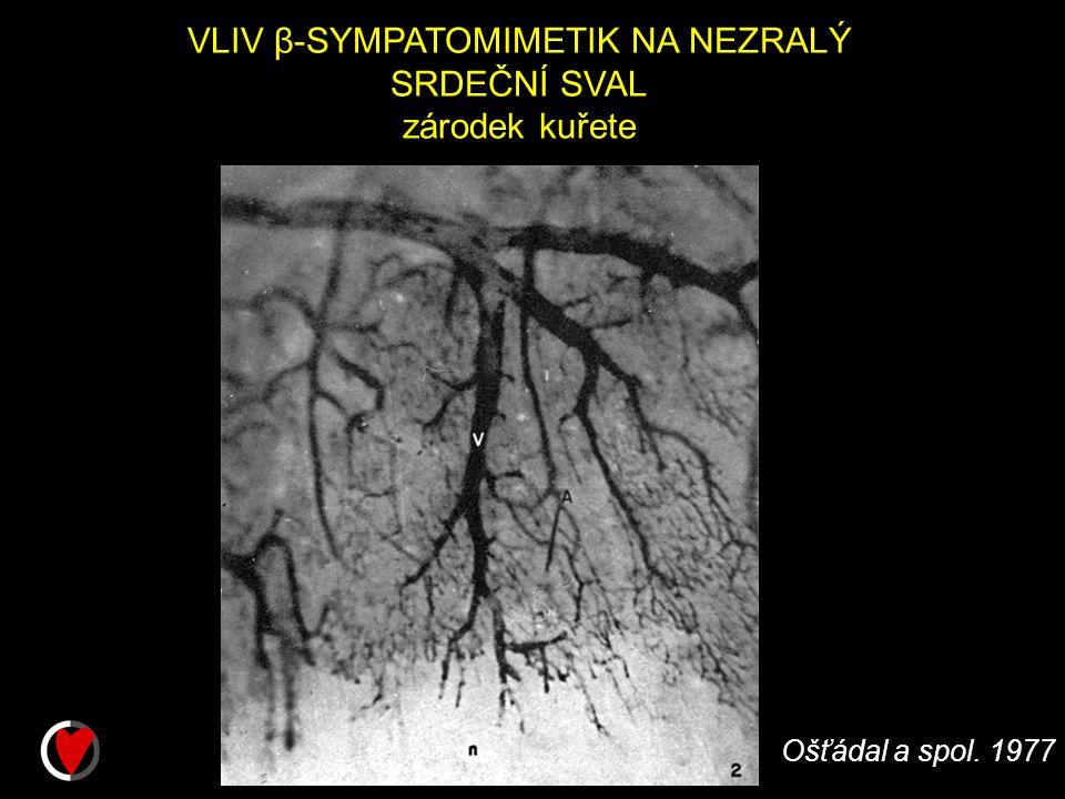 VLIV β-SYMPATOMIMETIK NA NEZRALÝ SRDEČNÍ SVAL zárodek kuřete Ošťádal a spol. 1977