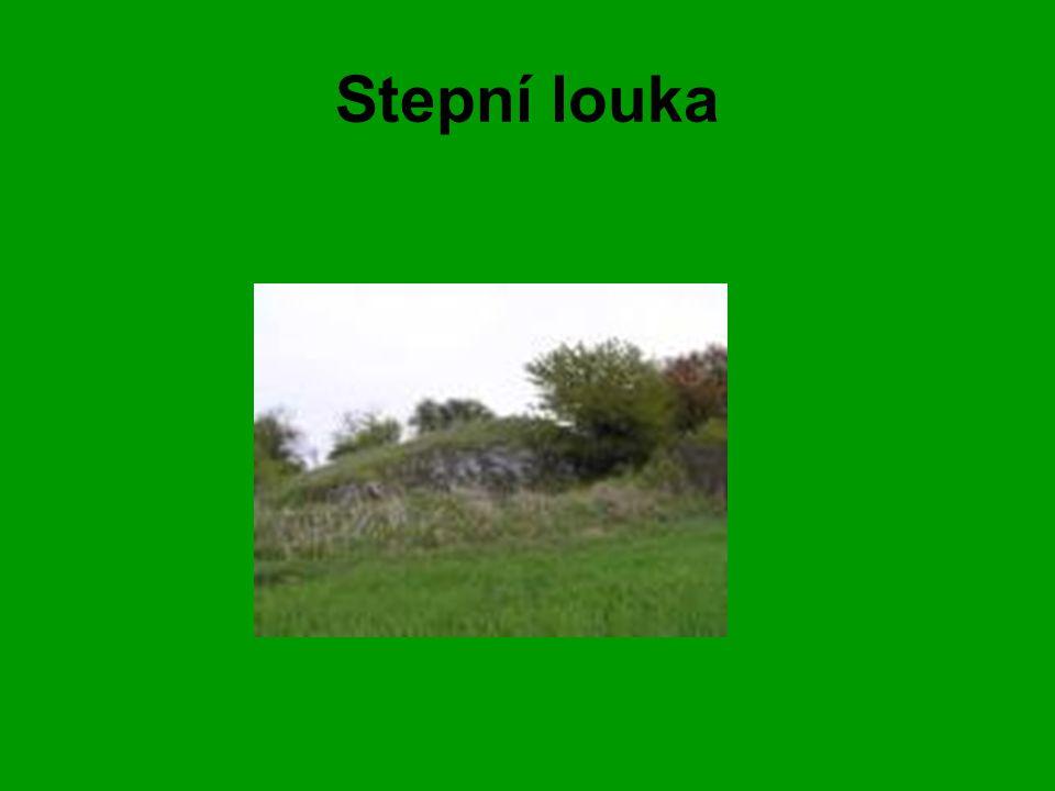Stepní louka
