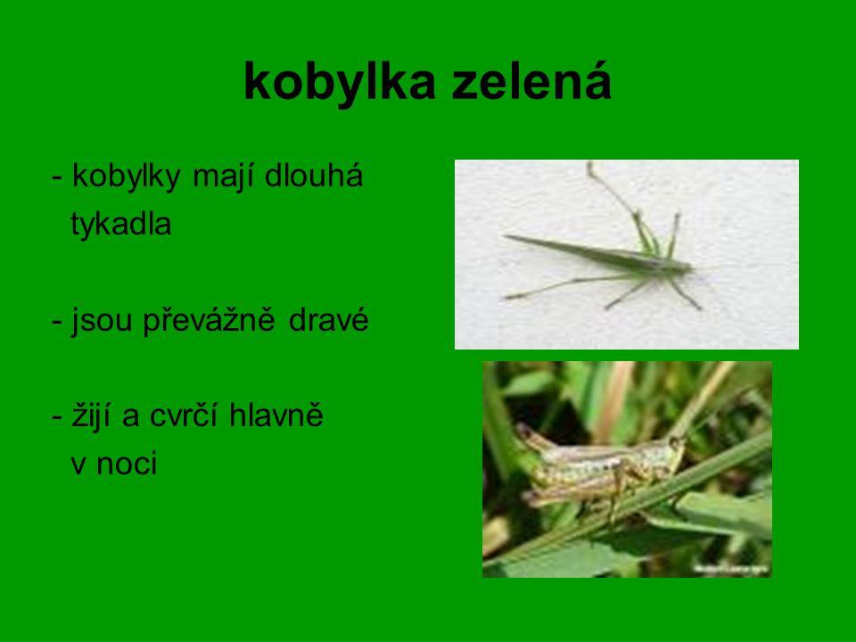 kobylka zelená - kobylky mají dlouhá tykadla - jsou převážně dravé - žijí a cvrčí hlavně v noci