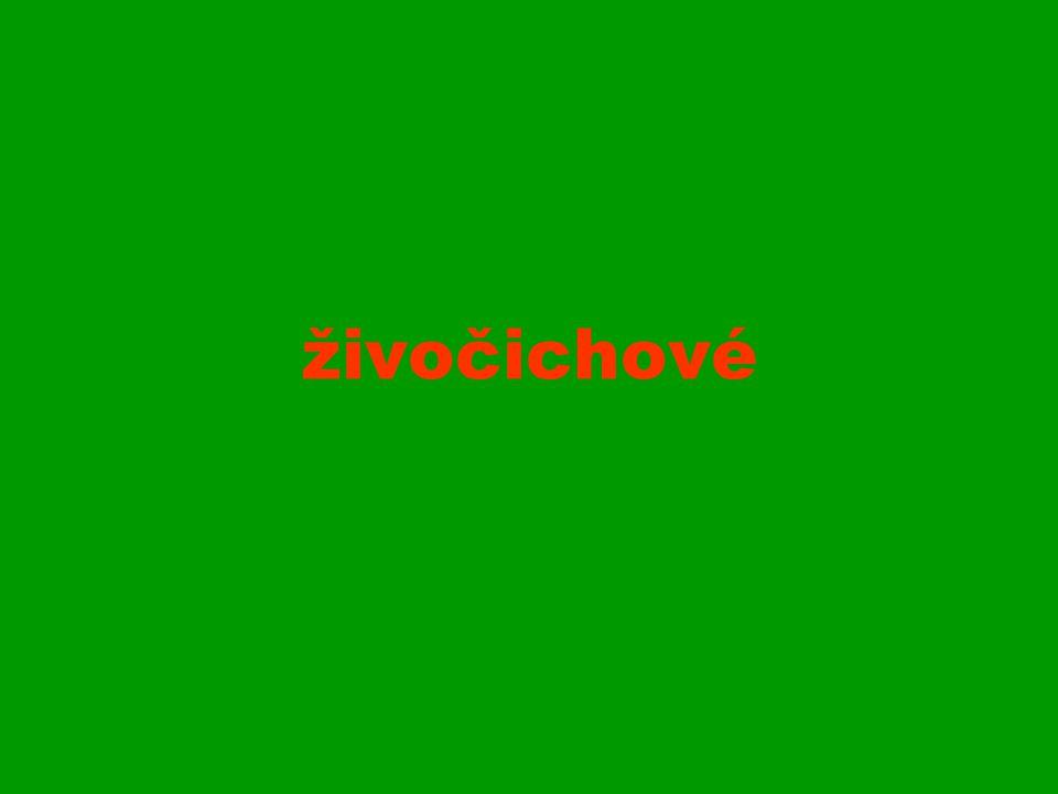 Louka vysokohorská zvonek český (krkonošský) je krkonošský endemit endemit = organismus vyskytující se pouze na určitém (jednom) místě