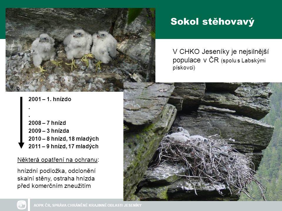 AOPK ČR, SPRÁVA CHRÁNĚNÉ KRAJINNÉ OBLASTI JESENÍKY Sokol stěhovavý 2001 – 1.