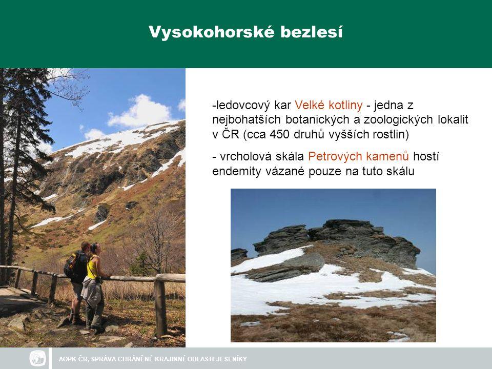AOPK ČR, SPRÁVA CHRÁNĚNÉ KRAJINNÉ OBLASTI JESENÍKY - smrkové pralesy - unikátní alpínská hranice lesa - řada druhů zde má jediný výskyt v ČR Horské pralesy jednokvítek velekvětý