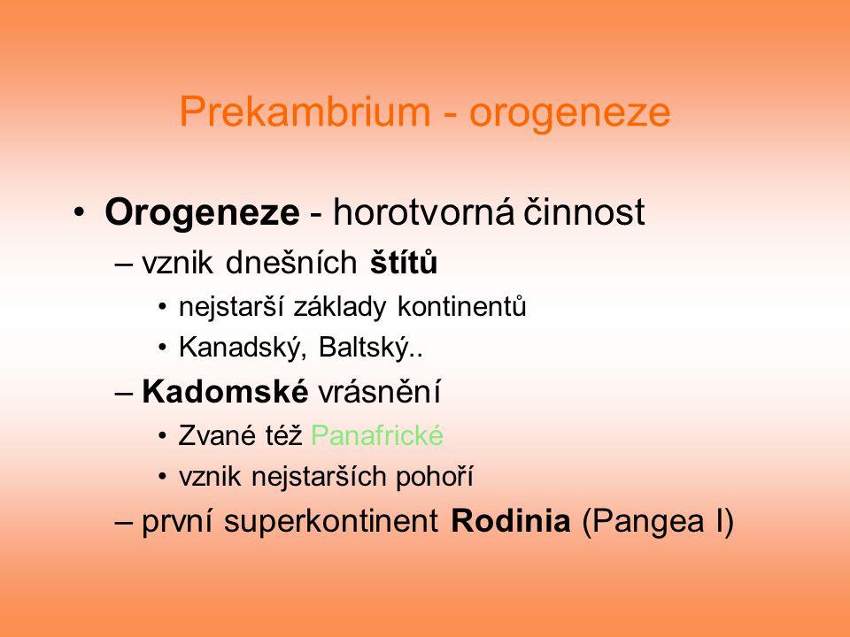 Prekambrium - orogeneze Orogeneze - horotvorná činnost –vznik dnešních štítů nejstarší základy kontinentů Kanadský, Baltský.. –Kadomské vrásnění Zvané