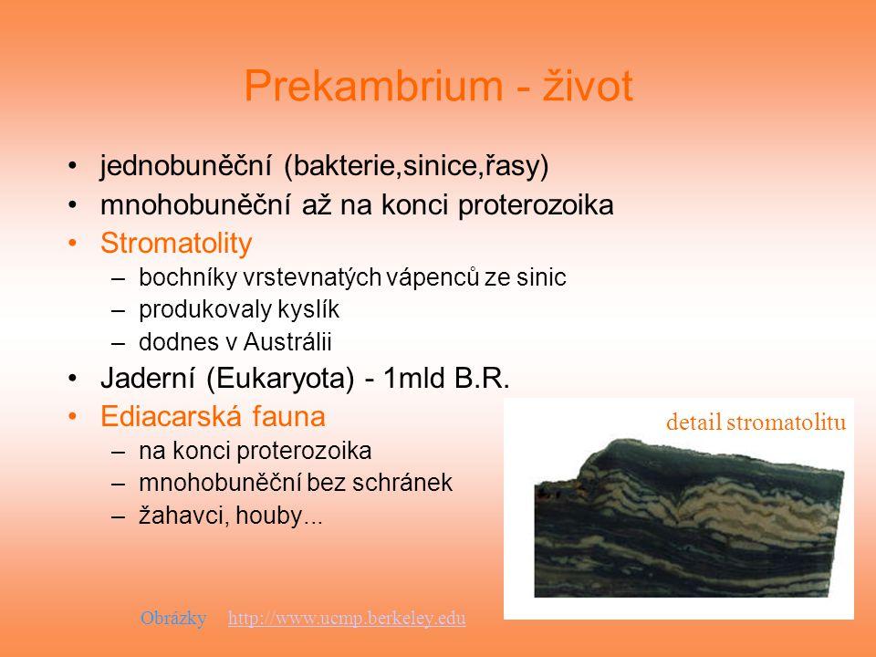 Prekambrium - život jednobuněční (bakterie,sinice,řasy) mnohobuněční až na konci proterozoika Stromatolity –bochníky vrstevnatých vápenců ze sinic –pr