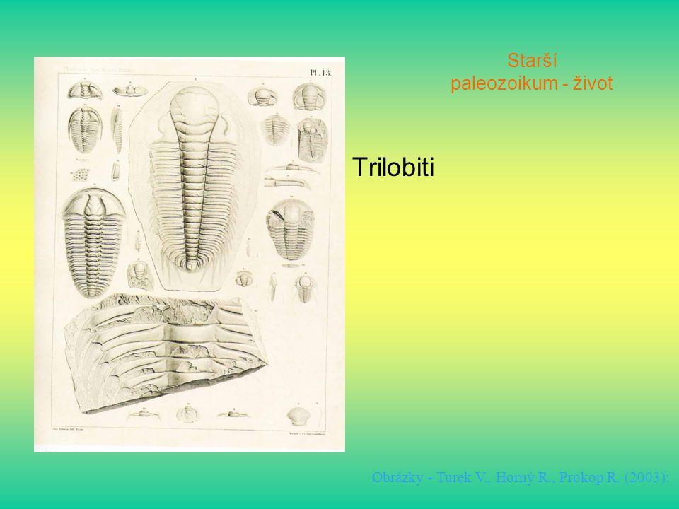 Starší paleozoikum - život Trilobiti Obrázky - Turek V., Horný R., Prokop R. (2003):